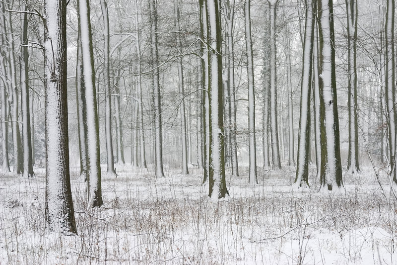Árvores com neve fotos de stock royalty free