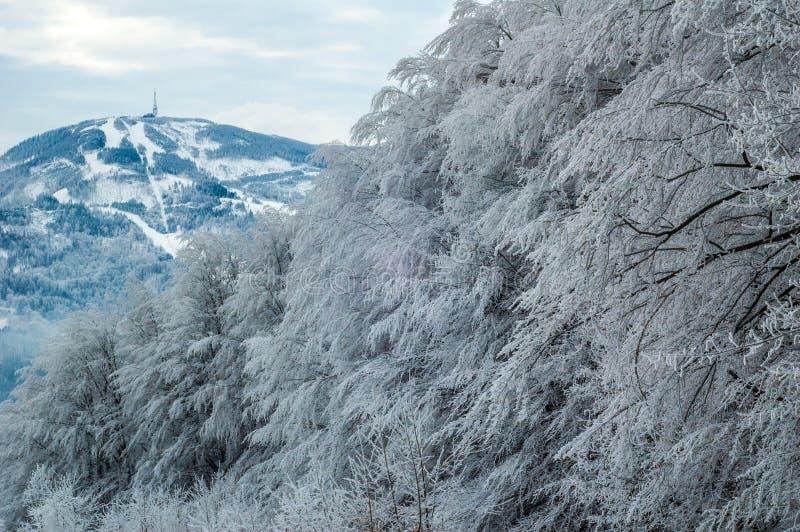 Árvores com o monte na distância imagem de stock royalty free