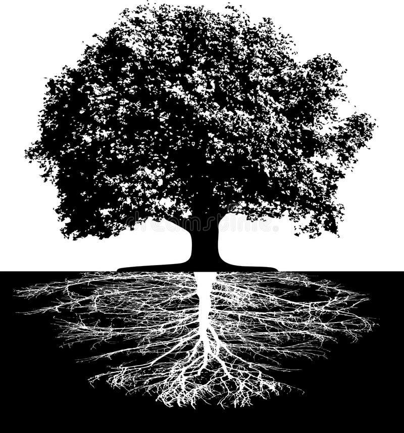 Árvores com raizes ilustração stock