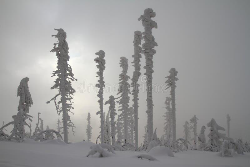 Árvores congeladas foto de stock royalty free