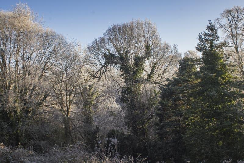 Árvores congeladas em um dia de invernos frio mesmo imagens de stock royalty free