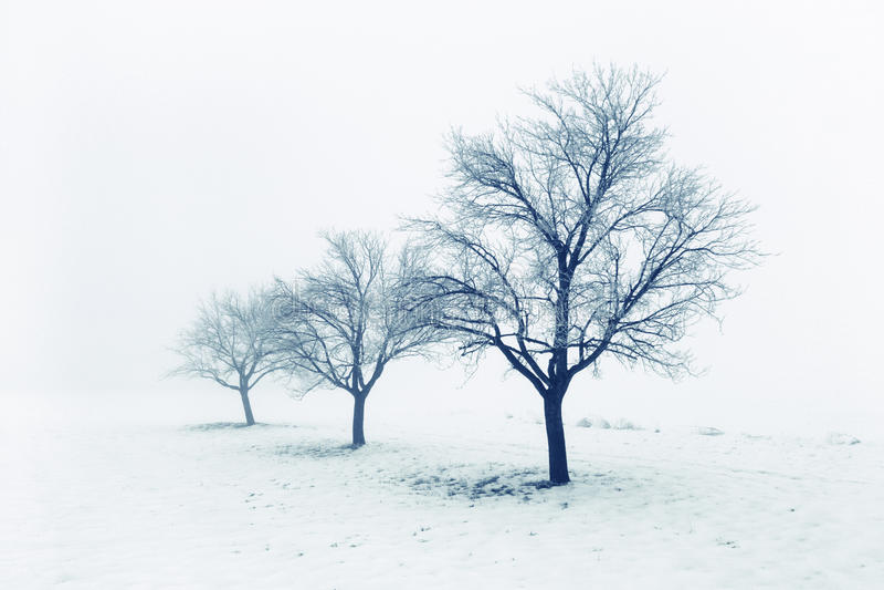 Árvores congeladas na neve imagens de stock royalty free