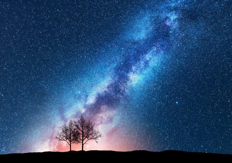 Árvores contra o céu estrelado com Via Látea espaço imagens de stock