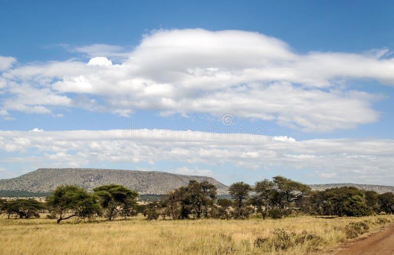 Árvores da acácia em Tanzânia imagens de stock