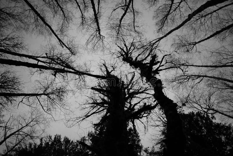 Árvores da aranha imagens de stock