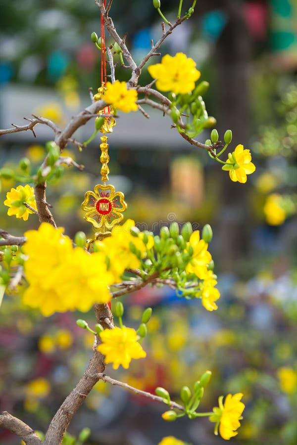 Árvores da flor de Tet os símbolos de feriados lunares do ano novo fotografia de stock