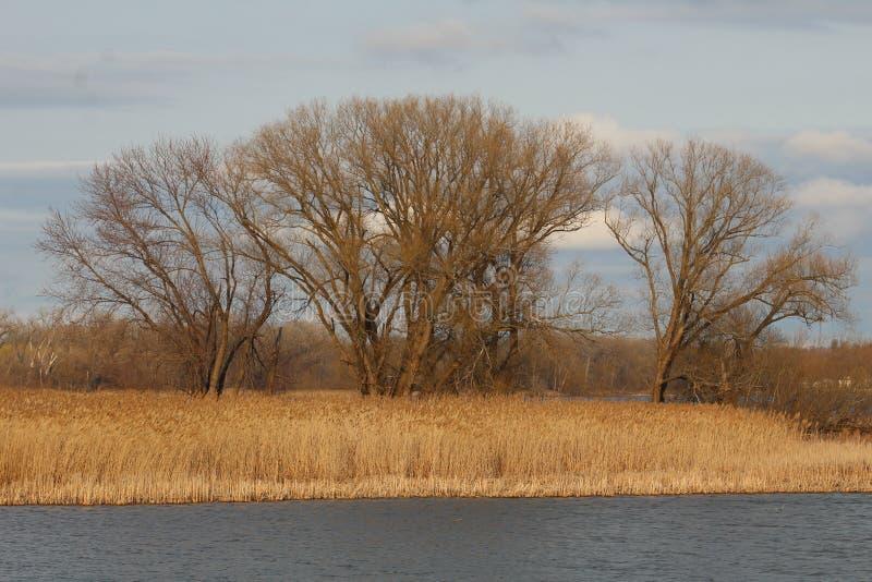 Árvores da ilha do rio na mola adiantada fotografia de stock