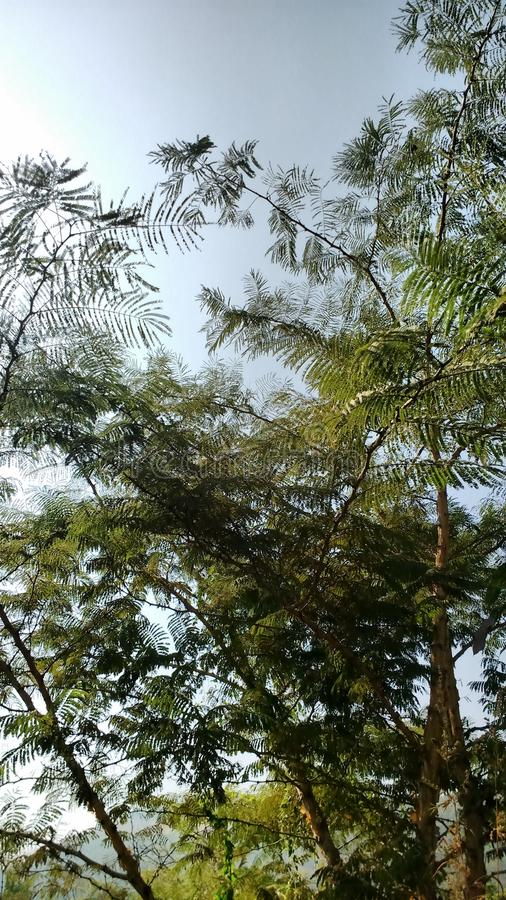 Árvores da natureza imagens de stock
