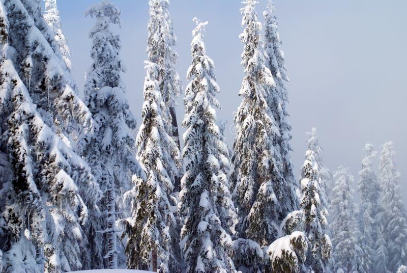 Árvores da neve foto de stock royalty free