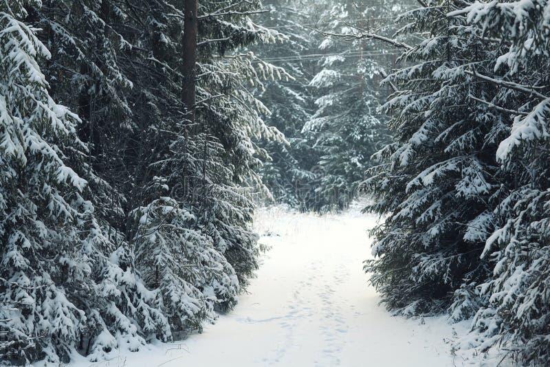 Árvores da neve da paisagem fotografia de stock royalty free