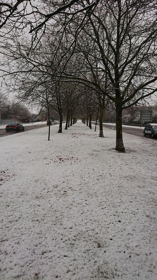 Árvores da neve no caminho duplo imagens de stock royalty free