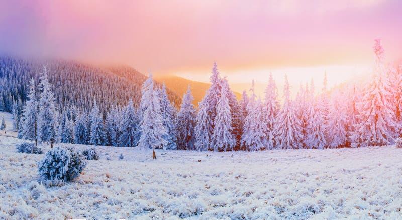 Árvores da paisagem do inverno na geada imagens de stock royalty free