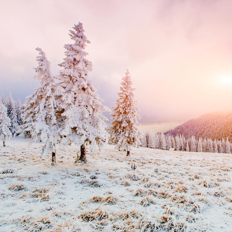Árvores da paisagem do inverno na geada imagem de stock royalty free