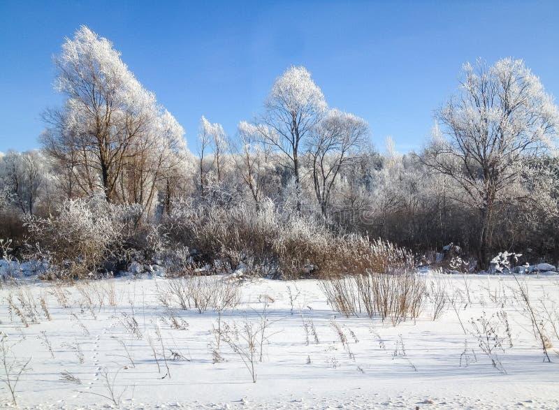 Árvores da paisagem do inverno na neve no fundo do céu azul imagem de stock