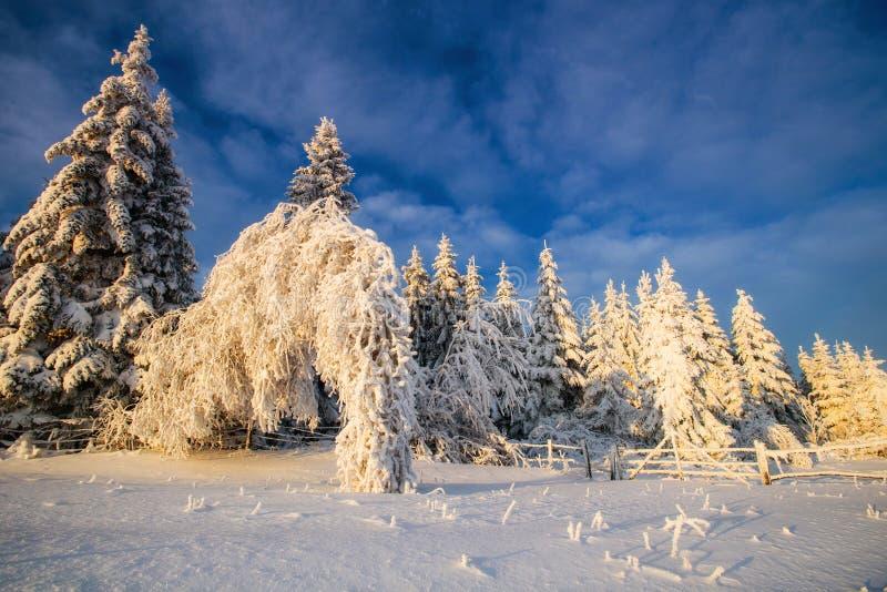 Árvores da paisagem do inverno no iniyi imagem de stock