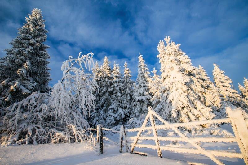 Árvores da paisagem do inverno no iniyi foto de stock royalty free