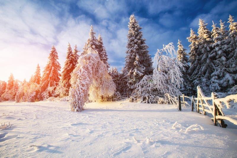 Árvores da paisagem do inverno no iniyi fotografia de stock royalty free