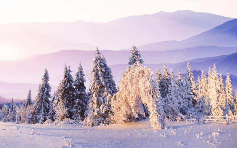 Árvores da paisagem do inverno no iniyi foto de stock