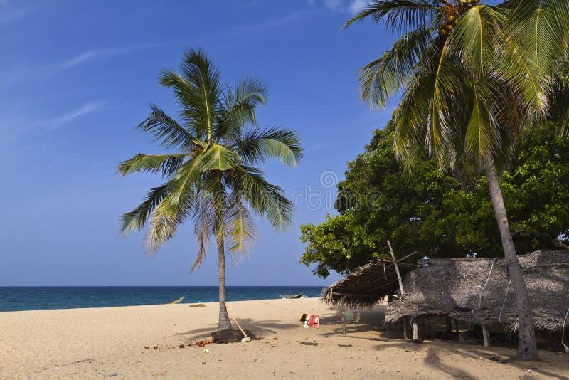 Árvores da praia e de coco do paraíso em Uppuveli, Sri Lanka imagem de stock