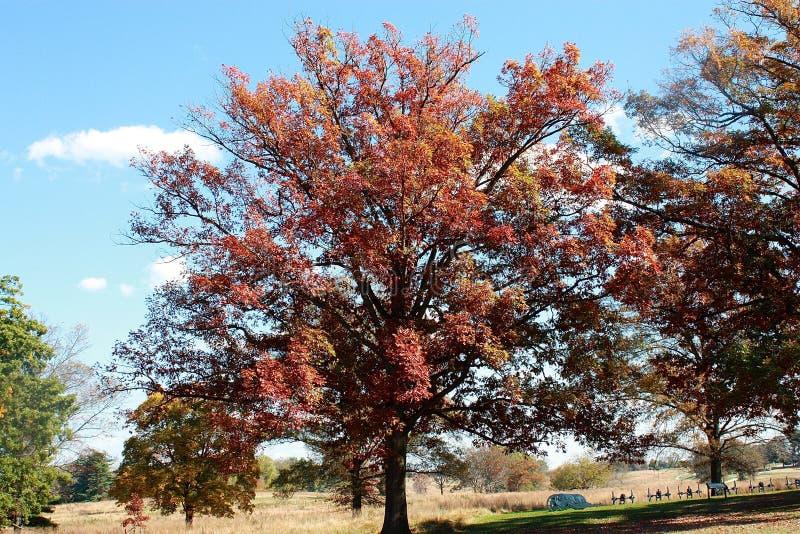 Árvores da queda com canhões foto de stock