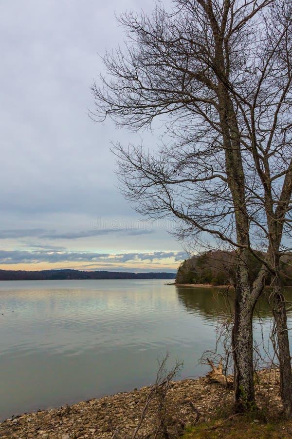 Árvores da represa e do inverno em um dia claro fotografia de stock