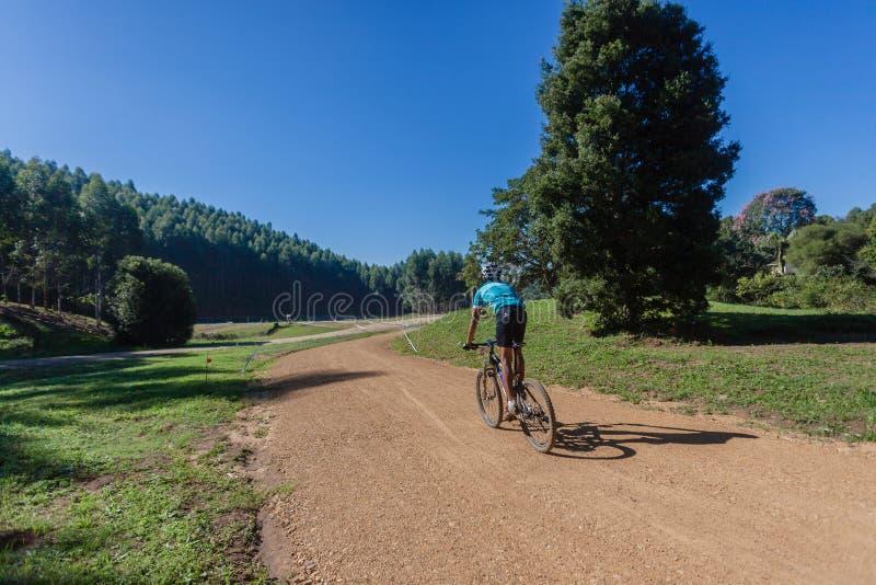 Árvores da trilha de sujeira do ciclista de MTB fotografia de stock