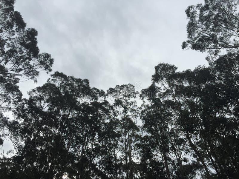 Árvores de baixo de imagem de stock royalty free