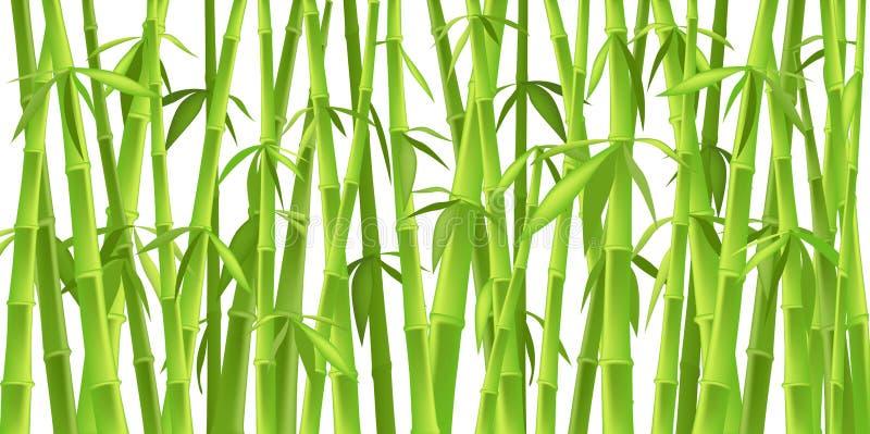 Árvores de bambu chinesas ilustração royalty free