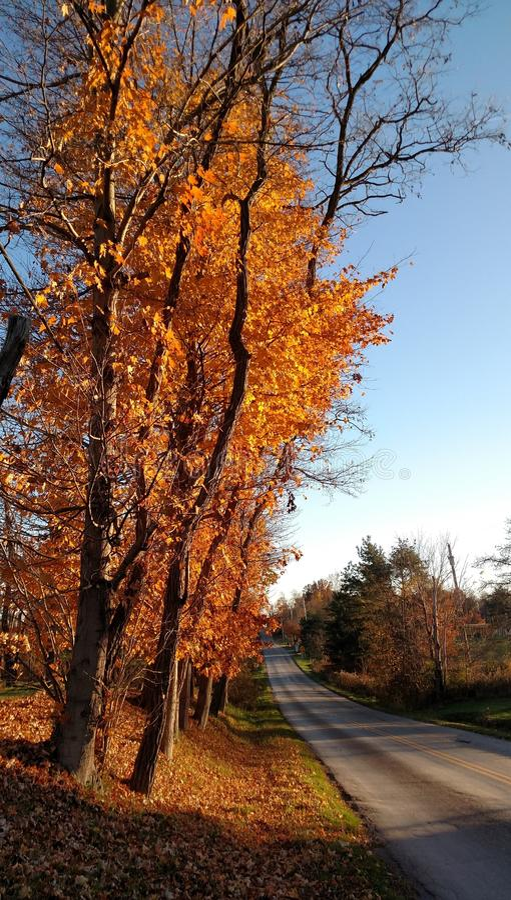 Árvores de bordo alaranjadas ao longo de uma estrada secundária quieta em um dia bonito do outono fotos de stock