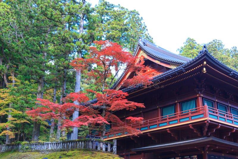 Árvores de bordo do outono perto do templo de Rinnoji de Nikko, Japão foto de stock royalty free
