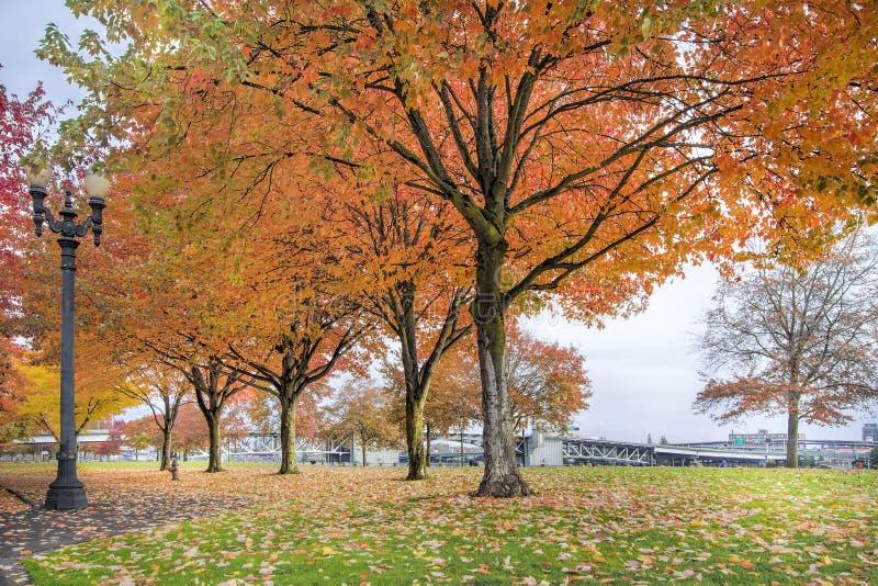 Árvores de bordo no parque do centro de Portland na queda imagem de stock royalty free