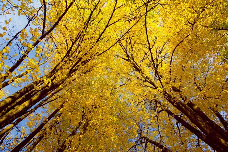 Árvores de bordos fotografia de stock royalty free