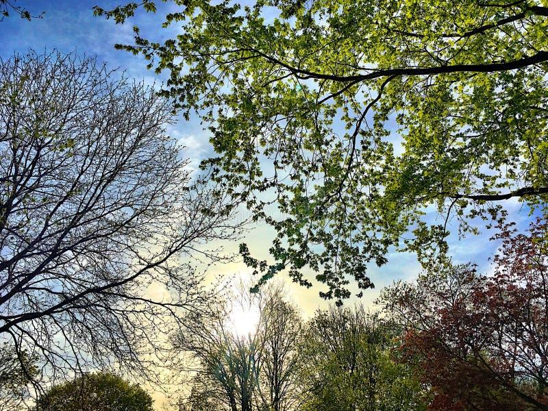 Árvores de brotamento durante o por do sol em um dia de mola fotografia de stock royalty free