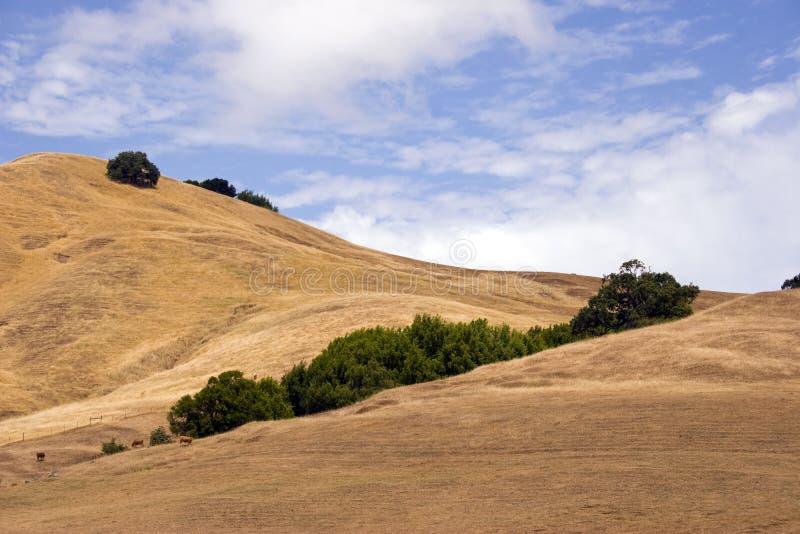 Árvores de Califórnia do vale de Sonoma imagens de stock royalty free