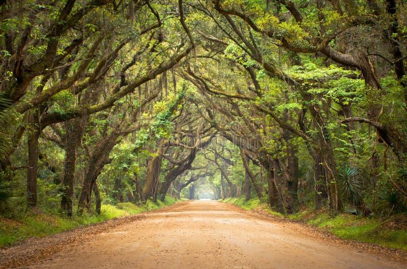 Árvores de carvalho assustadores da estrada de terra assustador do louro da Botânica fotografia de stock royalty free