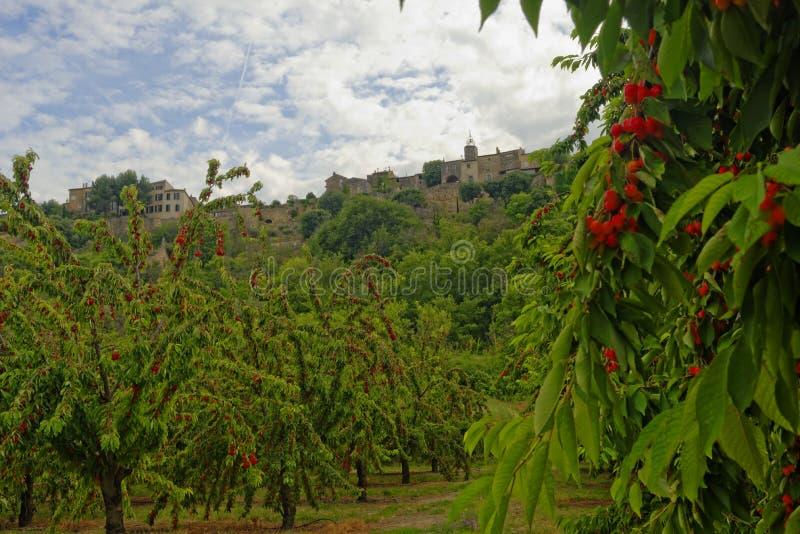 Árvores de cereja em Menerbes, Provence fotos de stock royalty free