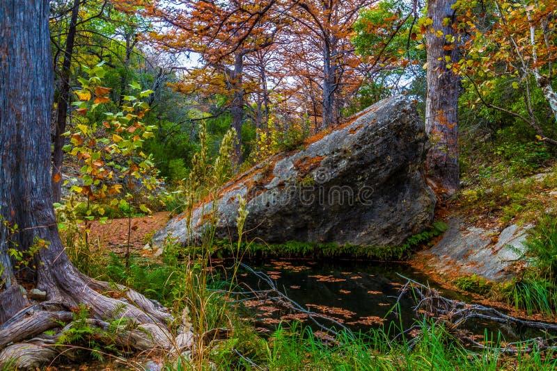 Árvores de Chipre na angra de Hamilton fotografia de stock royalty free