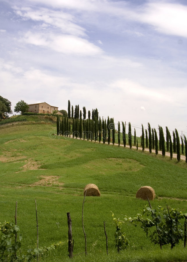 Árvores de cipreste de Tuscan imagens de stock