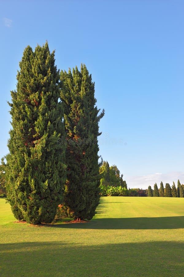 Árvores de cipreste pitorescas em um parque ajardinado imagem de stock royalty free