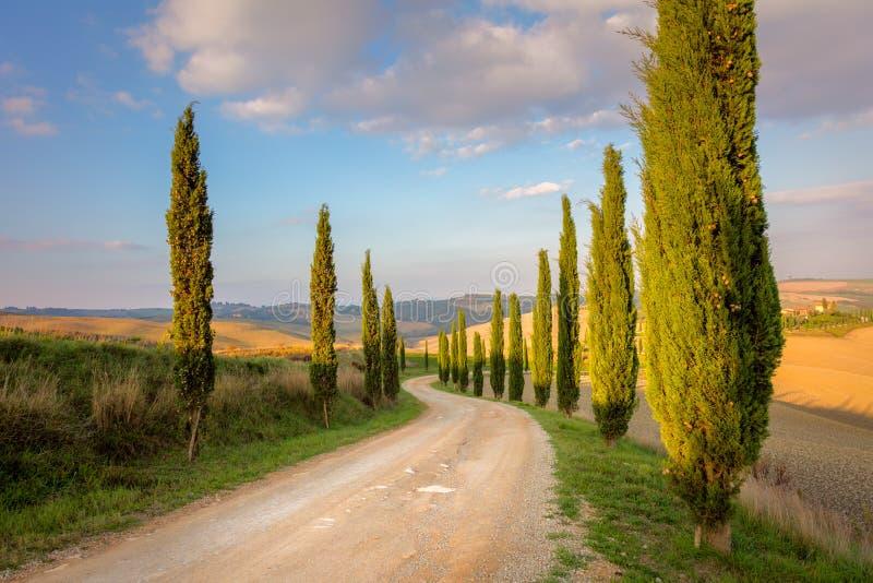 Árvores de ciprestes e estrada à terra, céu da manhã - Toscânia imagem de stock