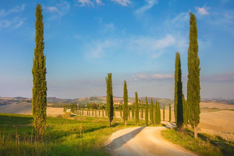 Árvores de ciprestes e estrada à terra, manhã - Toscânia imagens de stock royalty free