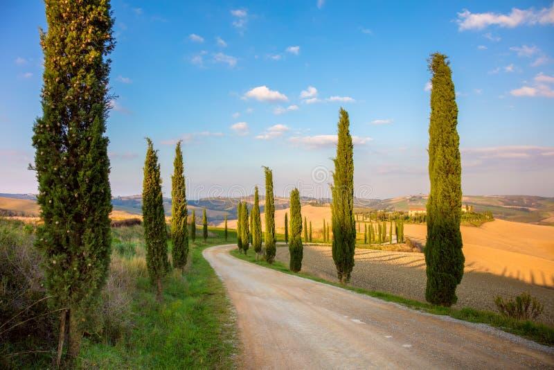 Árvores de ciprestes e estrada à terra - Toscânia rural foto de stock royalty free