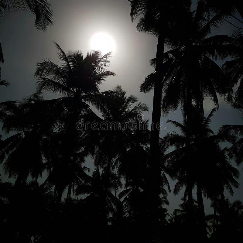 Árvores de coco brilhantes da luz de lua fotografia de stock royalty free