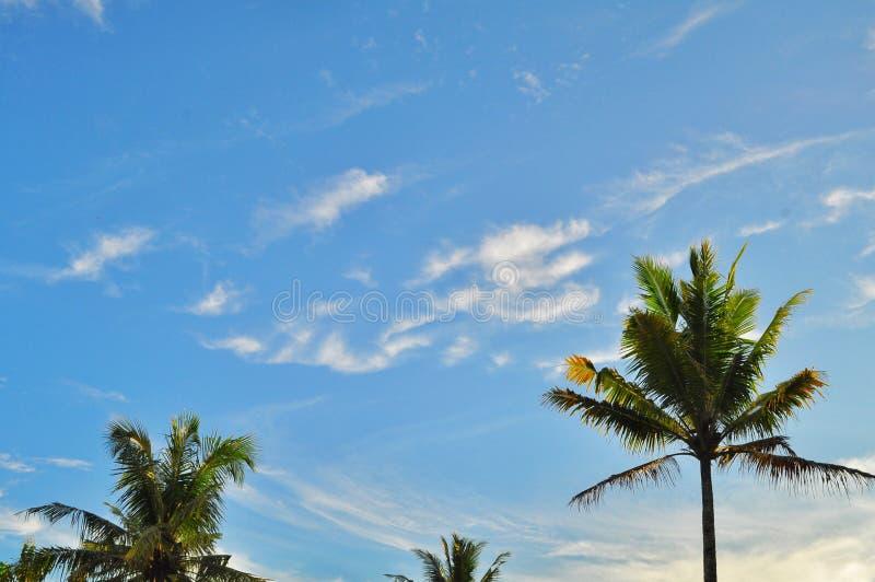 Árvores de coco com as nuvens brancas de surpresa e o fundo do céu azul fotografia de stock royalty free
