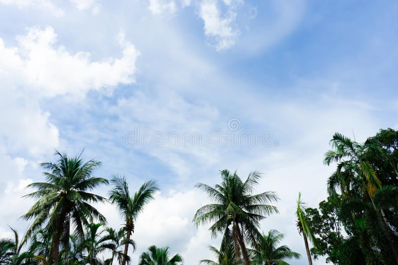 Árvores de coco com céu azul e nebuloso imagens de stock royalty free