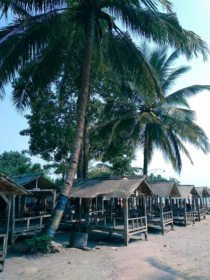 árvores de coco perto da praia foto de stock royalty free