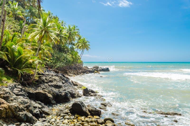 Árvores de coco, vegetação intensa e grandes rochas em contato com o mar foto de stock