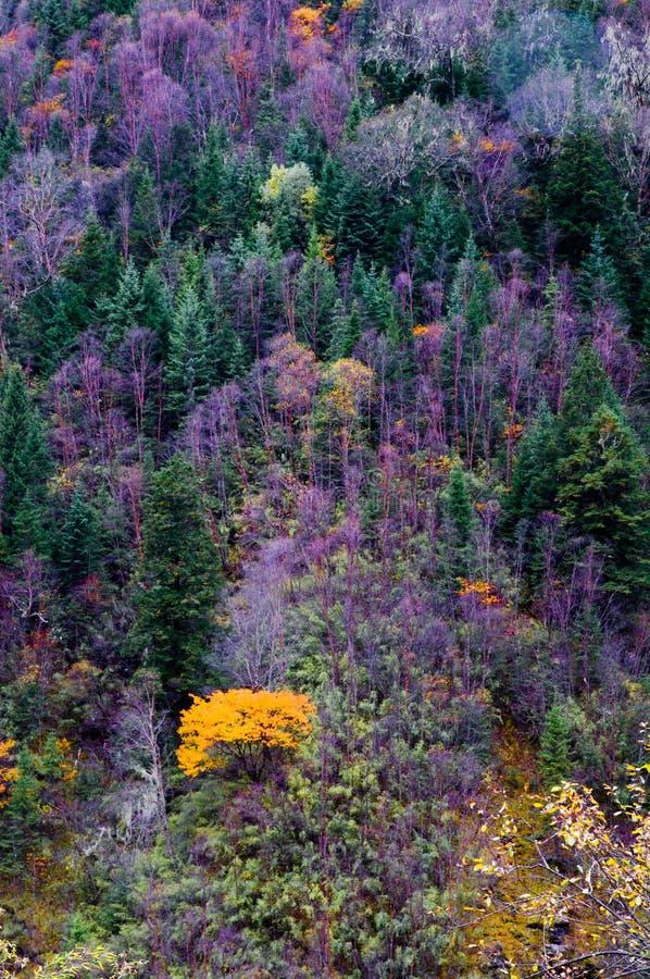 Árvores de Colorized imagens de stock