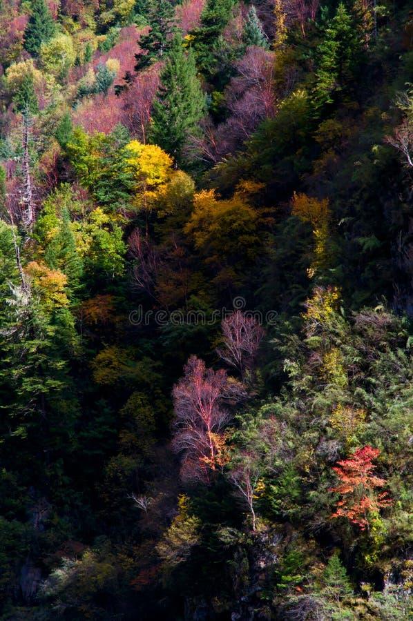 Árvores de Colorized na luz do sol foto de stock