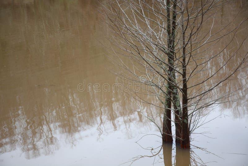 Árvores de Cypress na água fotografia de stock